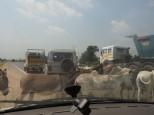 En Inde tu attends que la route se libére ... c'est sacré