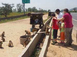 Première rencontre pour la famille avec les singes en liberté ! Nourrir les animaux en Inde donne du bon Karma