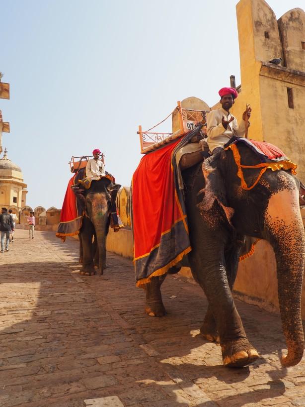 Elephants Jaipur