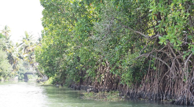 Sacado, les pieds dans l'eau au Kérala