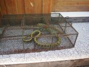 Serpent de repas à Fenghuang
