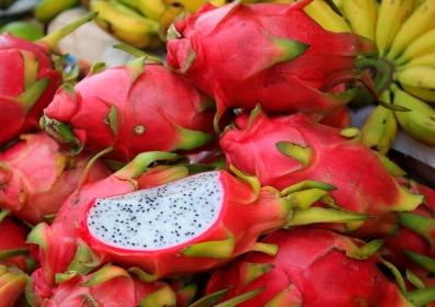 fruits_dragon