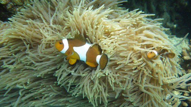 Pulau Tioman : une belle découverte !