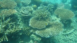 Malaisie - Pulau Tioman