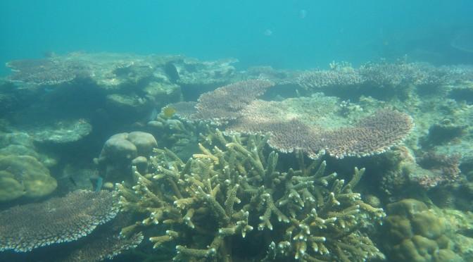 L'écosystème sous-marin se meurt… par Thomas