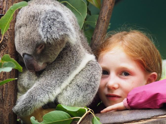 Le Koala par Jeanne