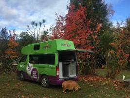 Nouvelle-Zélande - Tongariro River trail