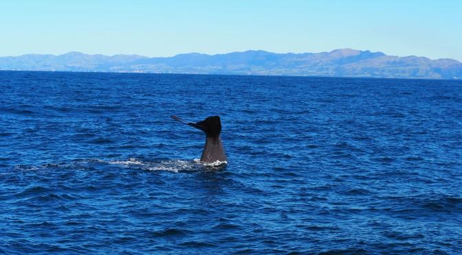 La magie des baleines de Kaikoura