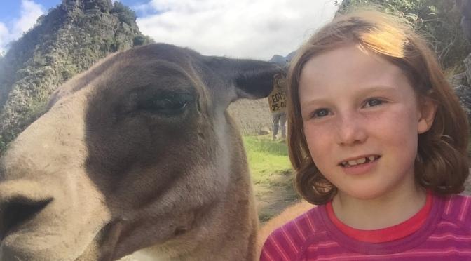 Encore plus de lamas par Jeanne