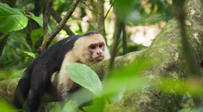 Costa Rica, deuxième et dernière partie