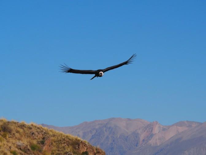 Aréquipa : Entre canyon, condors et rivières