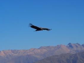 Pérou : Aréquipa - Canyon Del Colca